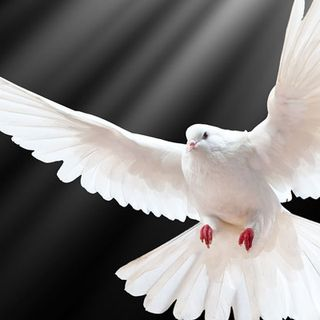 The Working of the Holy Spirit