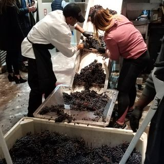 Boston's Newest Winery Gets First Shipment Of Grapes
