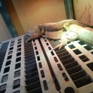 Episode 2: Sean Childers of The Chicago Reptile House