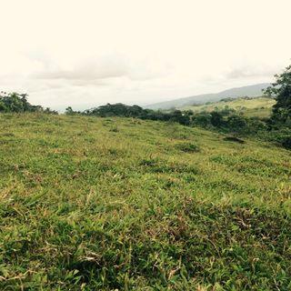 Tipos de Bosques en Costa Rica