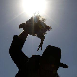 40 Grad im Schatten - Parabel auf die israelische Gesellschaft