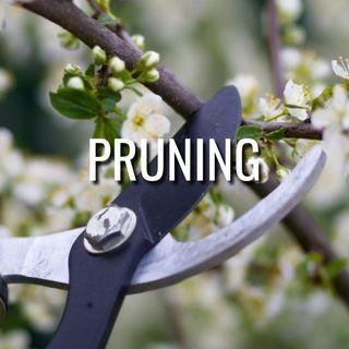 Pruning - Morning Manna #3205
