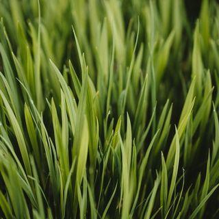 June 15 Fresh Cut Green Grass