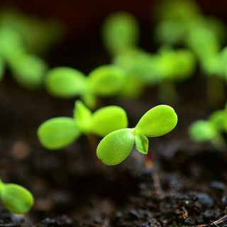 FAO: serve una strategia globale per la biodiversità