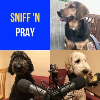 Sniff 'N Pray | Meeting Us In Our Pain - Romans 8