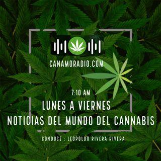 Noticias del mundo del Cannabis 14-01-2021
