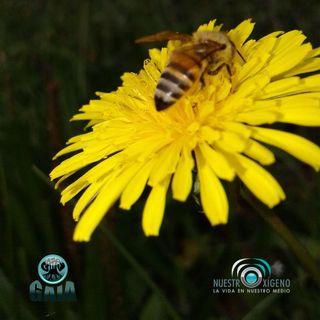 NUESTRO OXÍGENO Las abejas consecuencias de su extinción