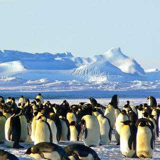 È vero che sono morti 10mila pinguini imperatore in Antartide?