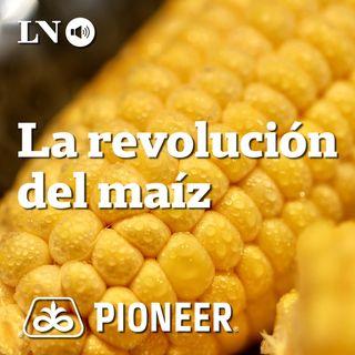 La revolución del maíz