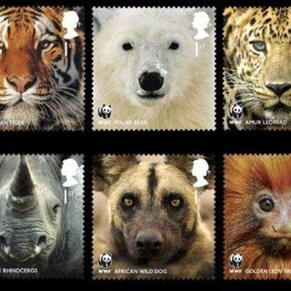 Endangered - La strumentalizzazione del leone