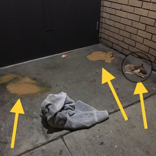 SFPD Blames Me For Homeless Man Bringing Piles Of Diarrhea To Property
