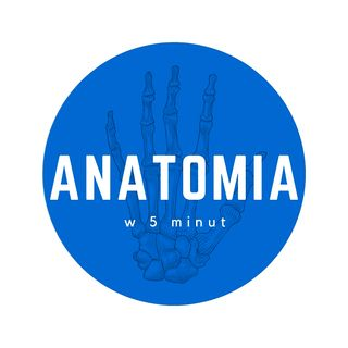 Anatomia w 5 minut - intro