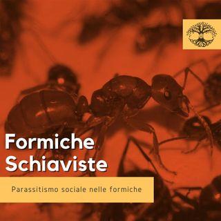 Formiche Schiaviste (Rubrica Etologica) - Impronta Animale