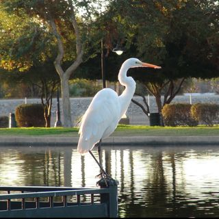 Bird Watching in Yuma, Arizona