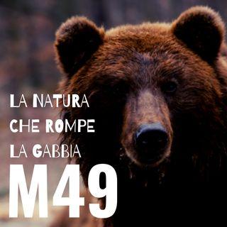 M49 - La natura che rompe la gabbia (trailer)