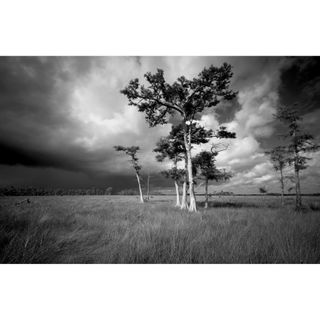 Clyde Butcher - Photographing the Everglades and Selling Clocks