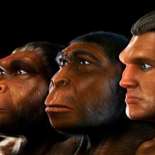 Teoría de la evolución