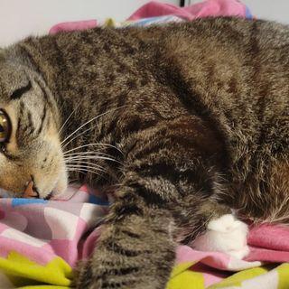 Episode 38 - Klonopin: A Long Cat Story
