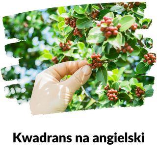 KNA: Lekcja 163 (zbieranie owoców)