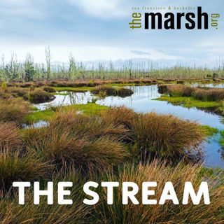 Wading into The Stream, a podcast from The Marsh