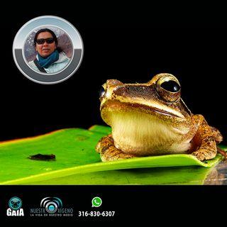 NUESTRO OXÍGENO Colombia país de anfibios - Dra. Argelina Blanco