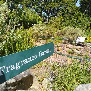 Episode 15 - Kirstenbosch Botanical Gardens