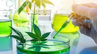 What's in your weed Ask the Experts at MCR Labs! In The Weeds with Jimmy Young