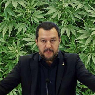 Salvini e la Cannabis: una storia triste