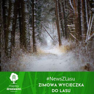 News z Lasu - Zimowa wycieczka do lasu