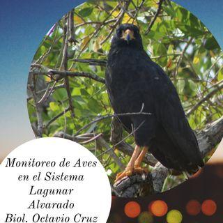 La Ruta del Manatí T1 Ep15- Octavio Cruz Biólogo de la UV nos comparte sus experiencias en el Monitoreo de Aves del Sistema Lagunar Alvarado