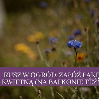 23 Rusz w ogród, zrób łąkę kwietną (na balkonie też!)