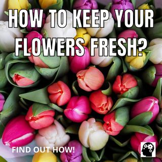 How to keep flowers fresh for a longer time?