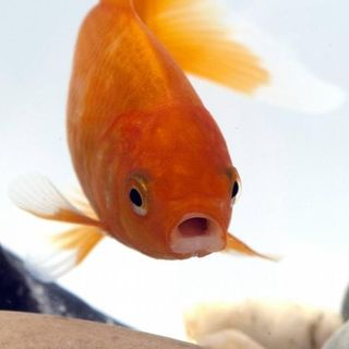 Von wegen dumm! Warum wir Fische unterschätzen