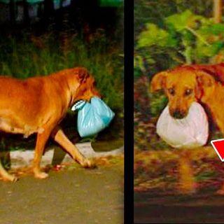 Il cane non tornava più la sera...la padrona decide cosi di seguirlo e scoprire il motivo