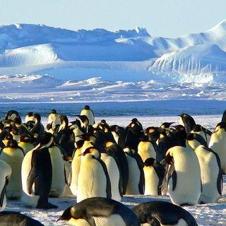 La colonia di pinguini imperatore della baia di Halley, in Antartide, non c'è più