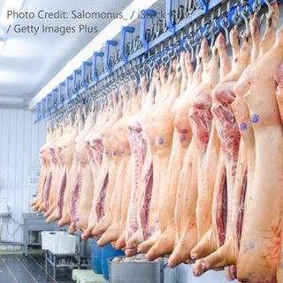 What's Shakin with Bacon? Volatility in the Pork Market