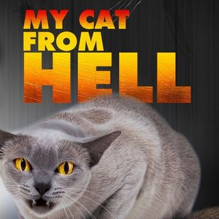 Jackson Galaxy From Animal Planets My Cat From Hell