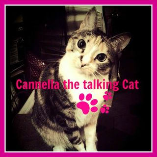 Cannella the talking Cat.