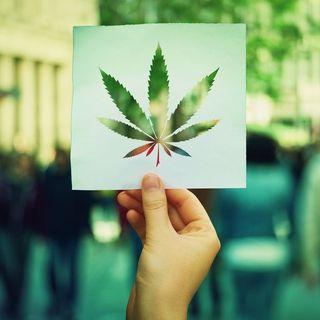 M5S e nuova proposta di legge sulla Cannabis
