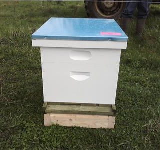 Beekeeping Start Up Costs