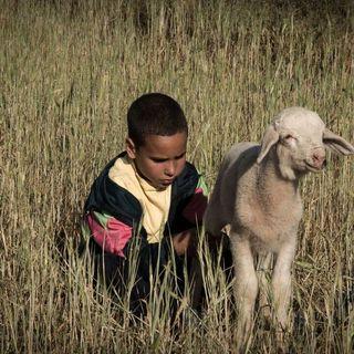 Approfondimenti - Crescere scavalcando le pecore