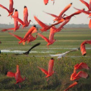 Flora y Fauna de los Llanos Orientales