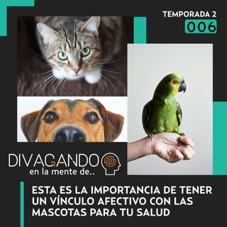 Mascotas | Divagando en la mente de las personas y los vínculos con los animales