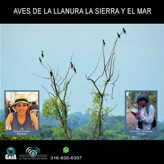NUESTRO OXÍGENO Aves de la llanura la sierra y el mar - Biólogos Diana Eusse-Giovanni Cárdenas