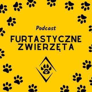 6: Jak bezpiecznie zabrać psa na wakacje - Aneta Młynarczyk