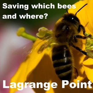 Episode 333 - Saving which bees and where