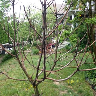 End of the Fig Tree- (Pre-Rec)