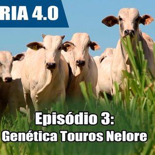 Websérie: Agropecuária 4.0 EP 03 - Genética Nelore garante resultados de destaque nacional