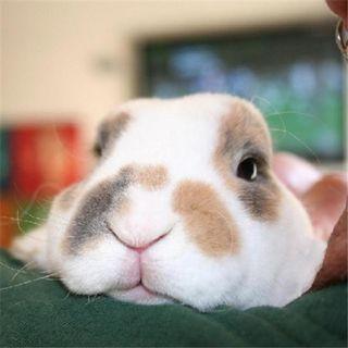 Book Bunny PR