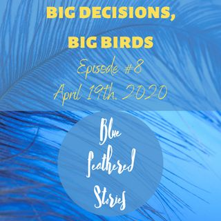 Big Decisions, Big Birds
